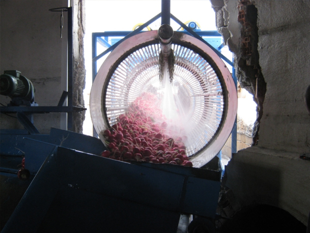 Carrot,Radish, Turnip Washing Machines
